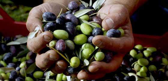 olive-prodotti-tipici-pugliesi