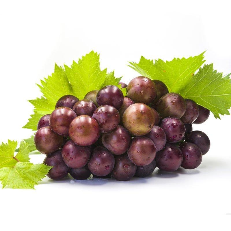 Vino Rosso Uva Pugliese